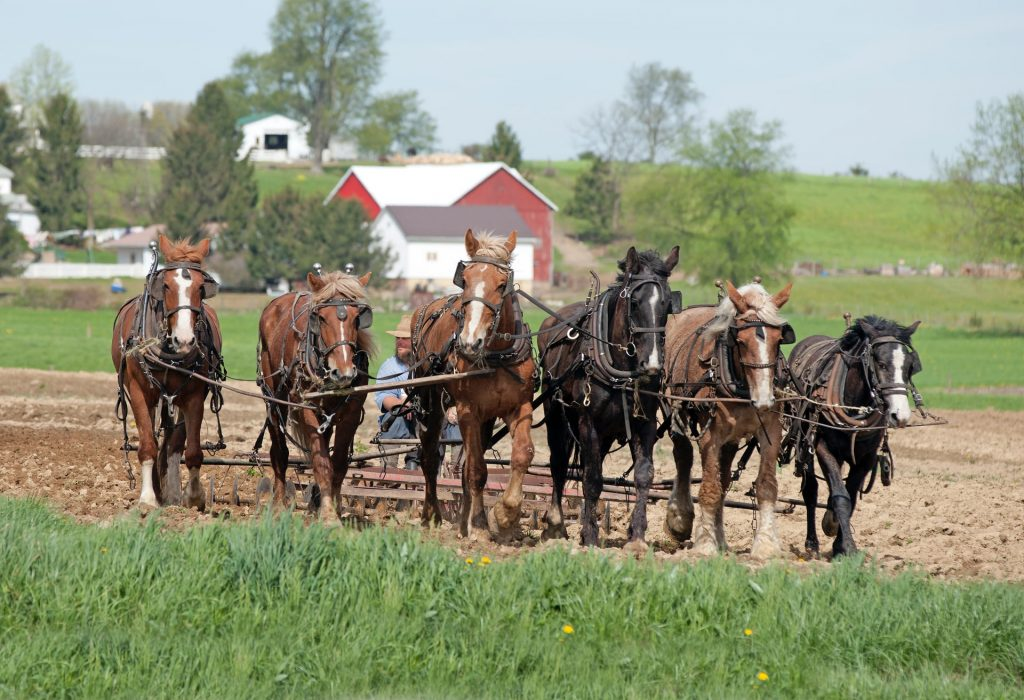 Робота в Чехії на сільському господарстві